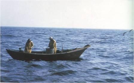 setting trawl